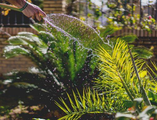 Reformas y Proyectos de Jardinería